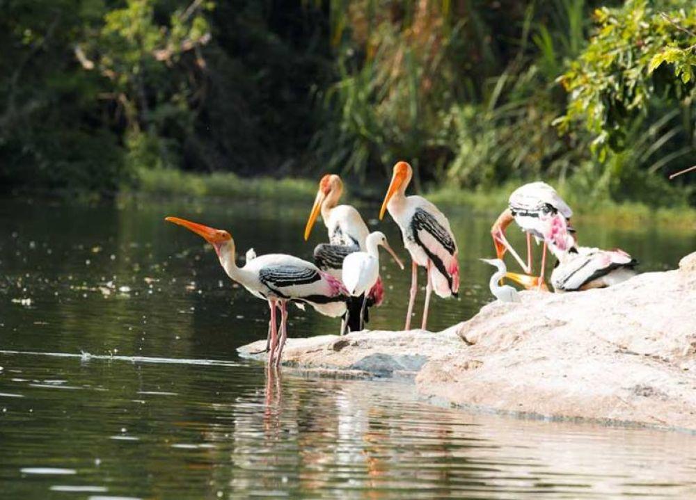 Mumbai to Karnala Bird Sanctuary