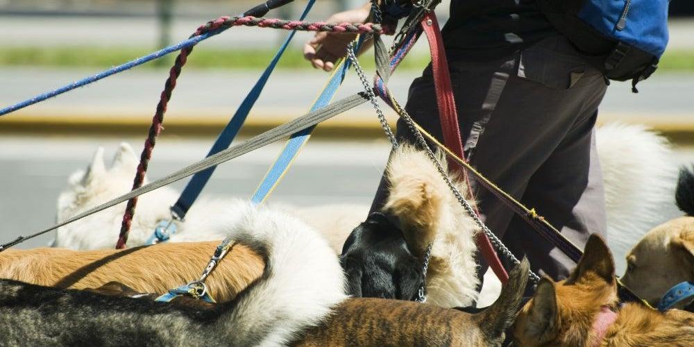 Business idea: Dog walker and pet sitter