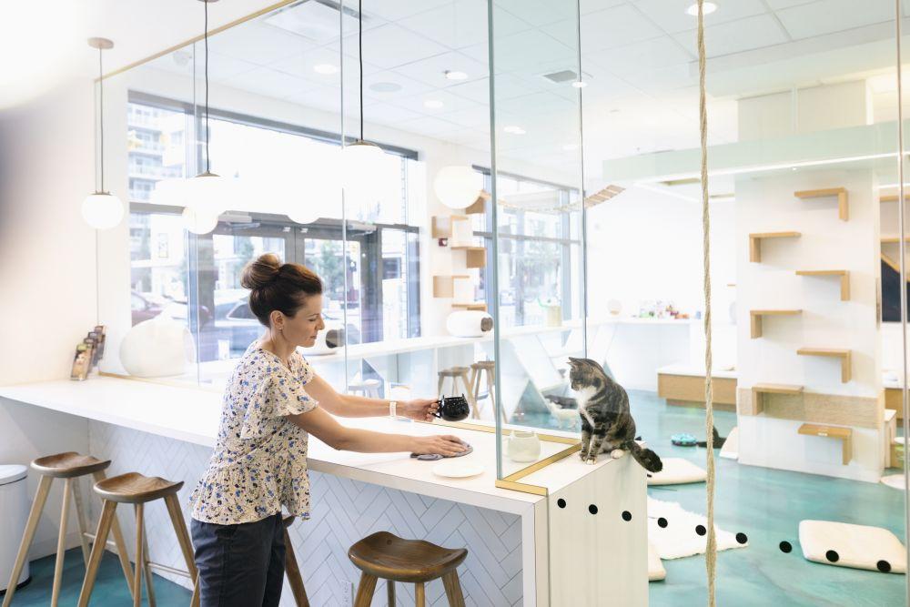 Cat café operator