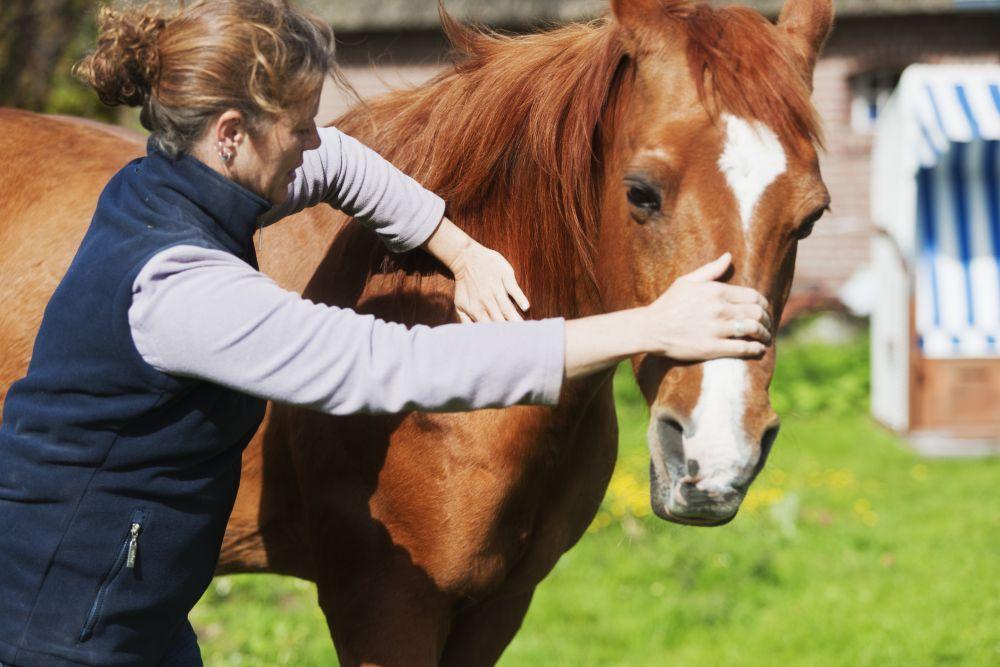 Pet massage therapist