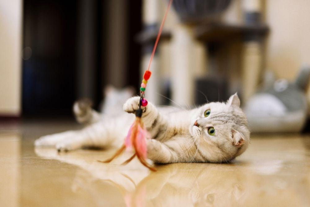 Pet toymaker