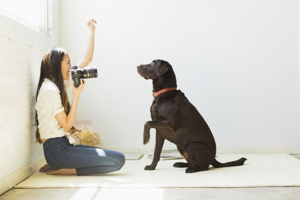 Pet photographer