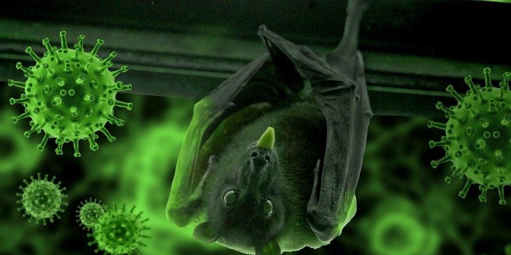 12. Bat Soup/Snakes Started The Virus
