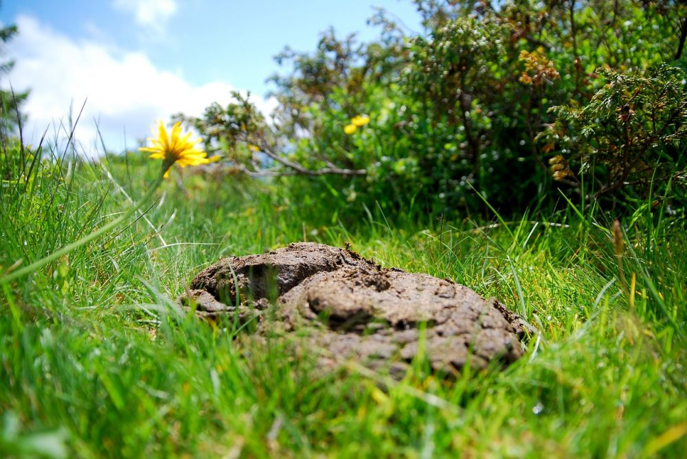 14. Using Cow Dung And Cow Urine Can Cure The Virus