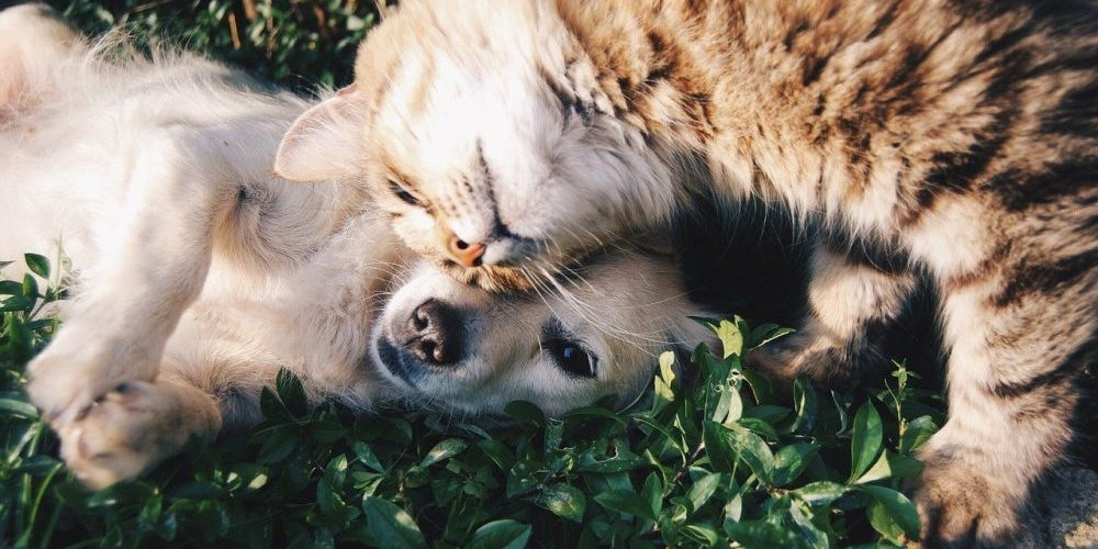17. Pets Can Spread The Disease