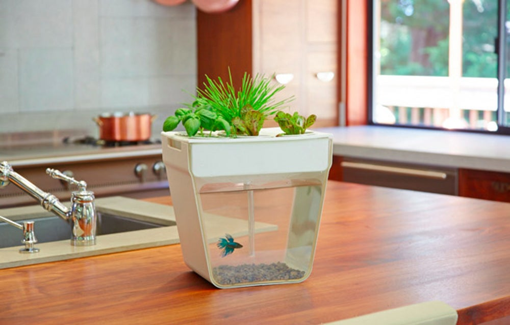 A fish tank and garden