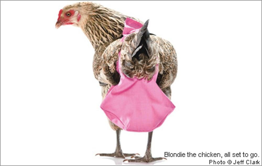 Chicken Diapers