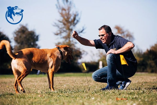 Man playing with a dog in a field.